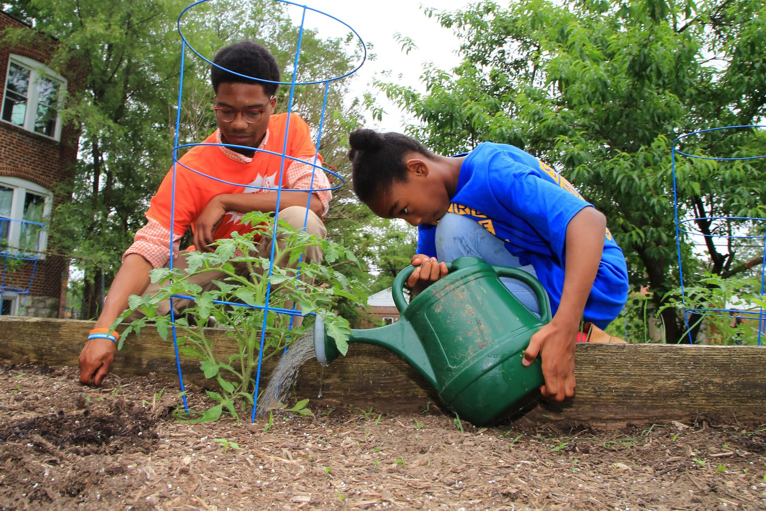 Vacant lots sponge up stormwater, produce community benefits