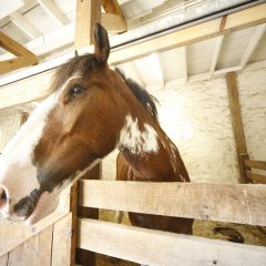 Tower Grove Park horses get award-winning stable upgrades