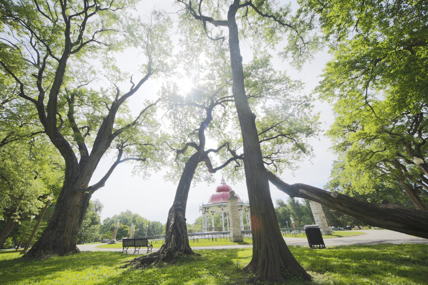 GPS technology zooms in on Tower Grove Park trees