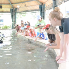 Zoo's Shark Week takes a bite out of summer