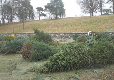 Christmas trees can be dropped off for recycling