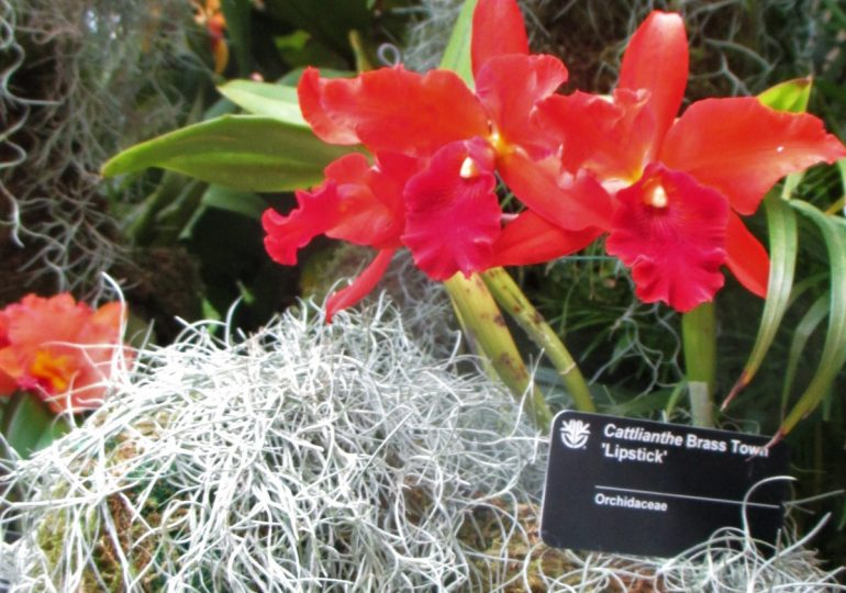Orchid show at Garden is tropical blast