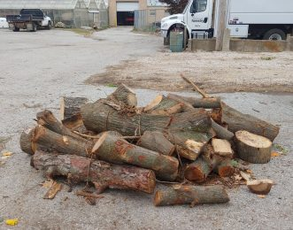 Firewood will be free for the taking at three city parks