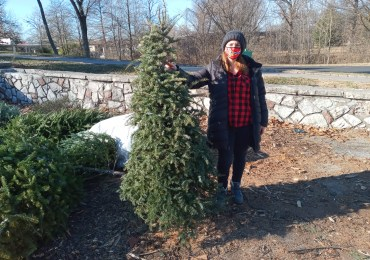 Once things of beauty, Christmas trees quickly become trash
